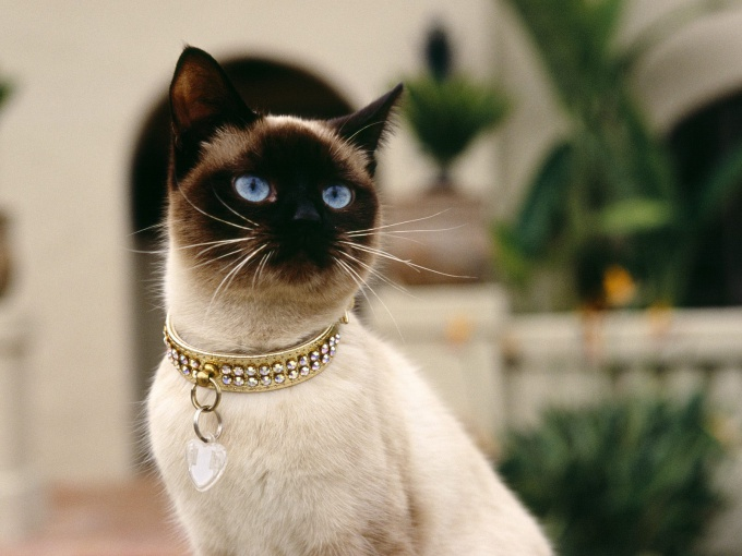 почему у кошки плохой аппетит